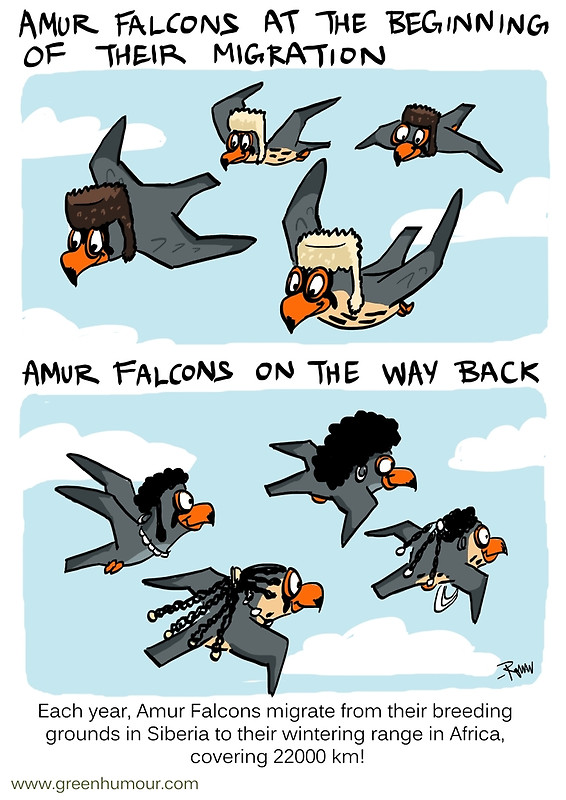 Amur Falcon clipart #8, Download drawings