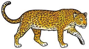 Amur Leopard clipart #20, Download drawings