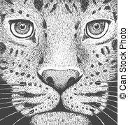Amur Leopard clipart #18, Download drawings