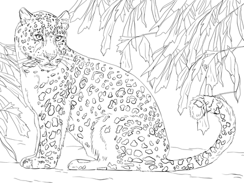 Leopard coloring #2, Download drawings