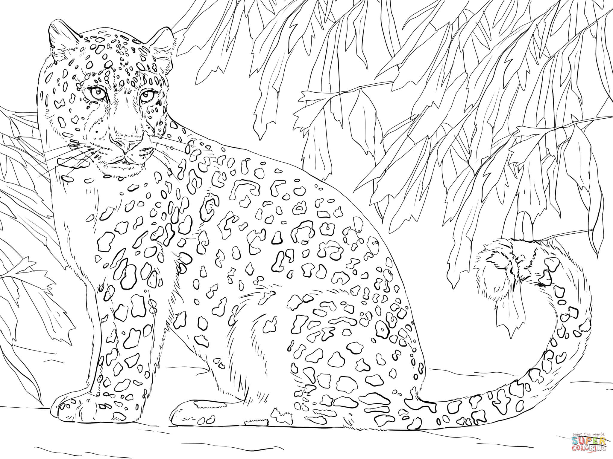 Leopard coloring #1, Download drawings