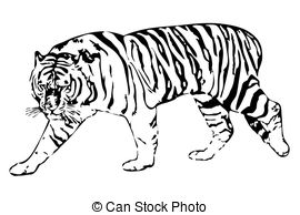 Amur Tiger clipart #20, Download drawings
