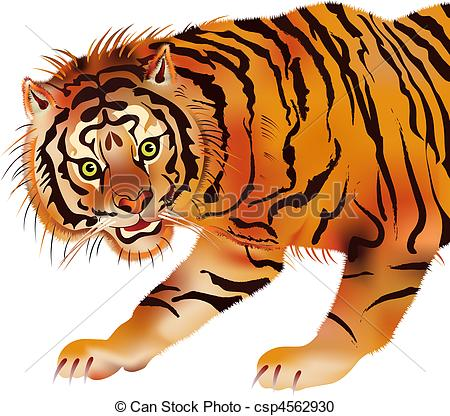 Amur Tiger clipart #15, Download drawings