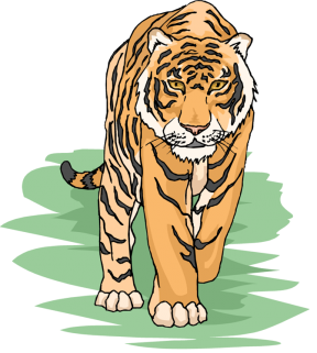 Amur Tiger clipart #13, Download drawings