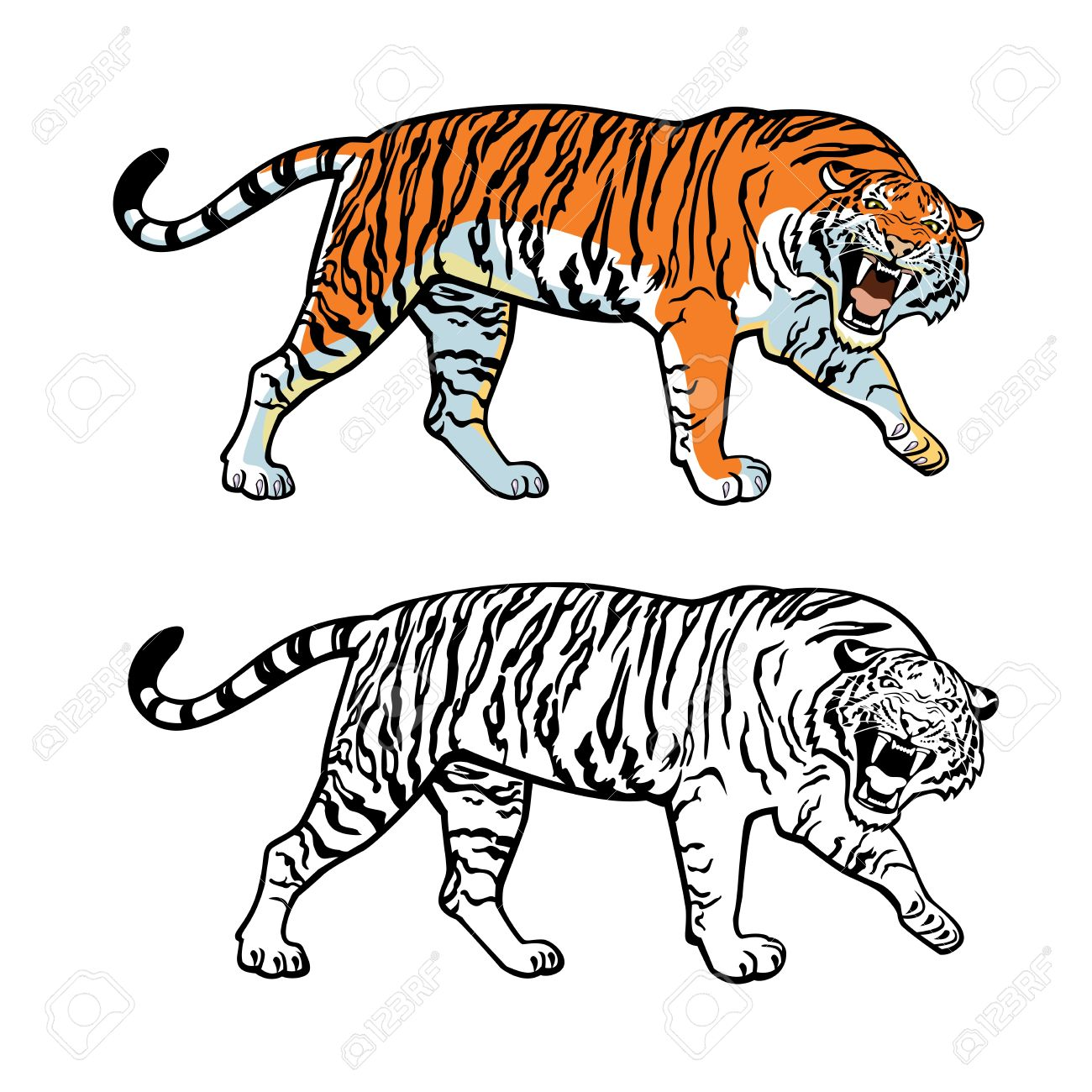 Amur Tiger clipart #12, Download drawings
