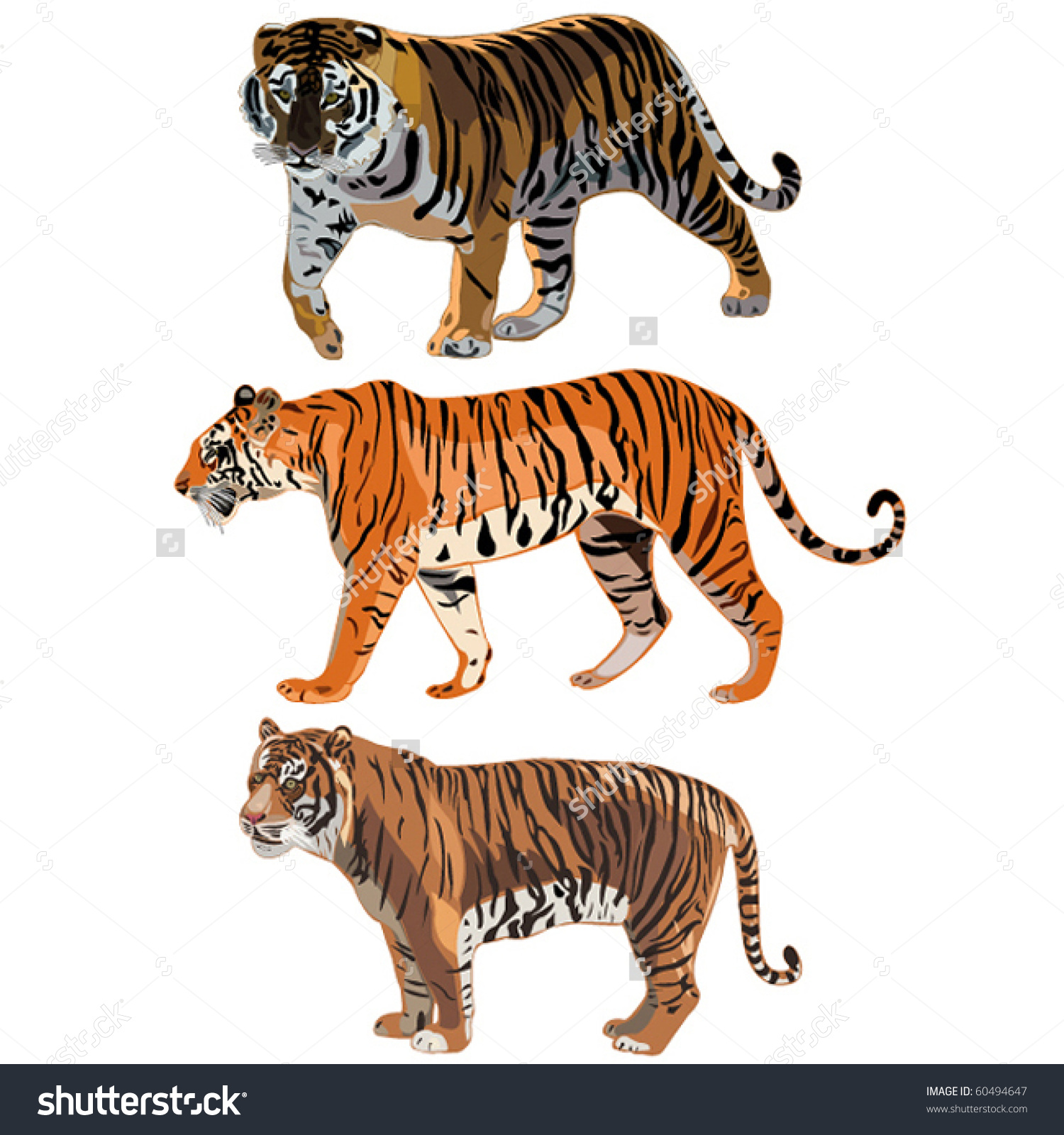 Amur Tiger clipart #9, Download drawings