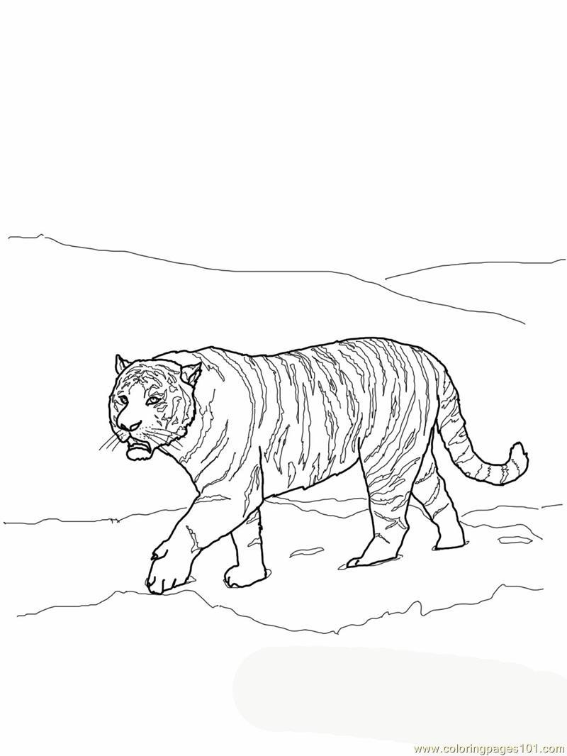 Amur Tiger coloring Download Amur