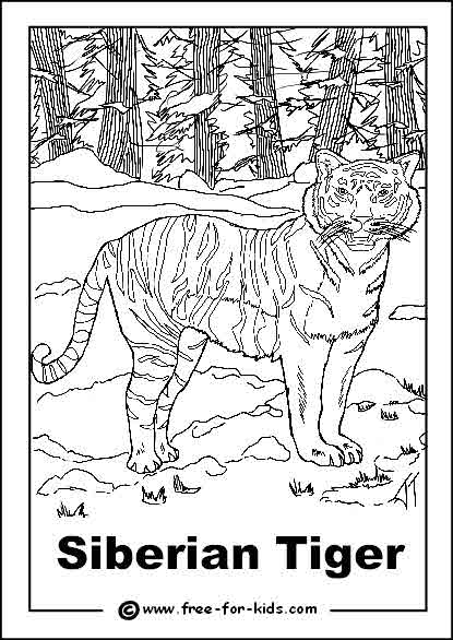 free coloring pages of endangered animals | Siberian Tiger coloring, Download Siberian Tiger coloring ...