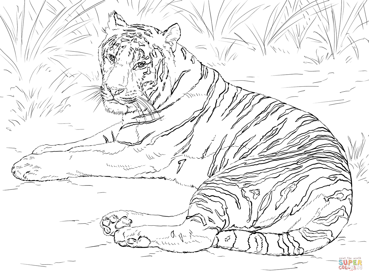 Sumatran Tiger coloring #6, Download drawings