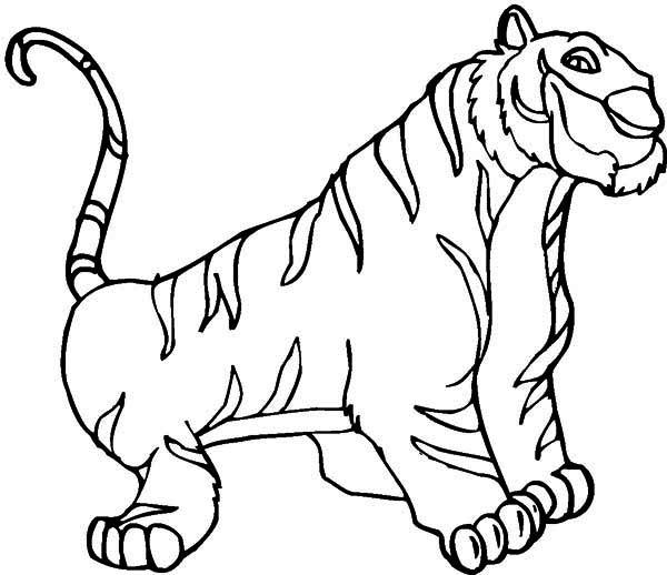 Siberian Tiger coloring Download