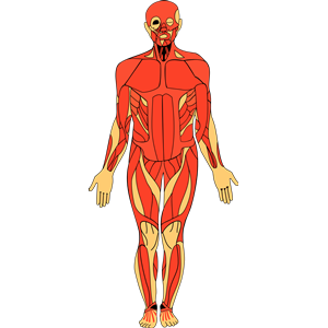 Anatomy svg #12, Download drawings