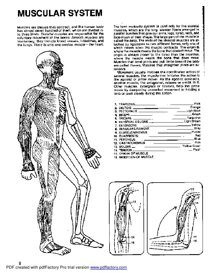 Anatomy coloring #1, Download drawings