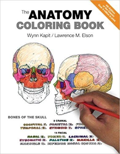 Anatomy coloring #18, Download drawings