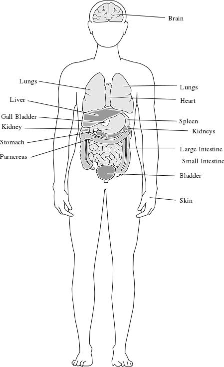 Anatomy coloring #13, Download drawings