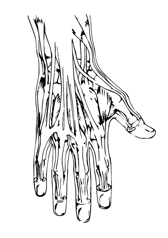 Anatomy svg #13, Download drawings