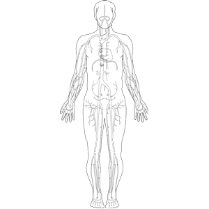Anatomy svg #17, Download drawings