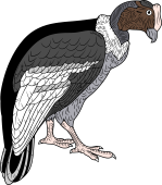 Andean Condor clipart #1, Download drawings