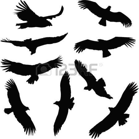 Andean Condor clipart #10, Download drawings