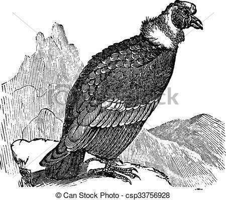 Andean Condor clipart #4, Download drawings