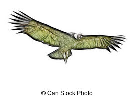 Andean Condor clipart #9, Download drawings