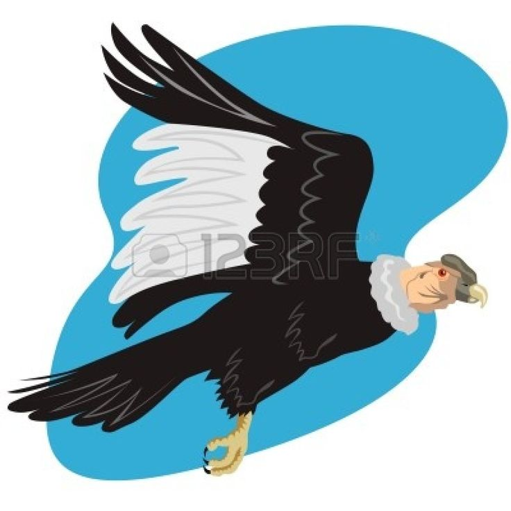 Andean Condor clipart #14, Download drawings