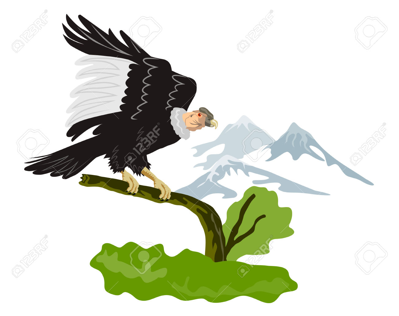 Andean Condor clipart #12, Download drawings