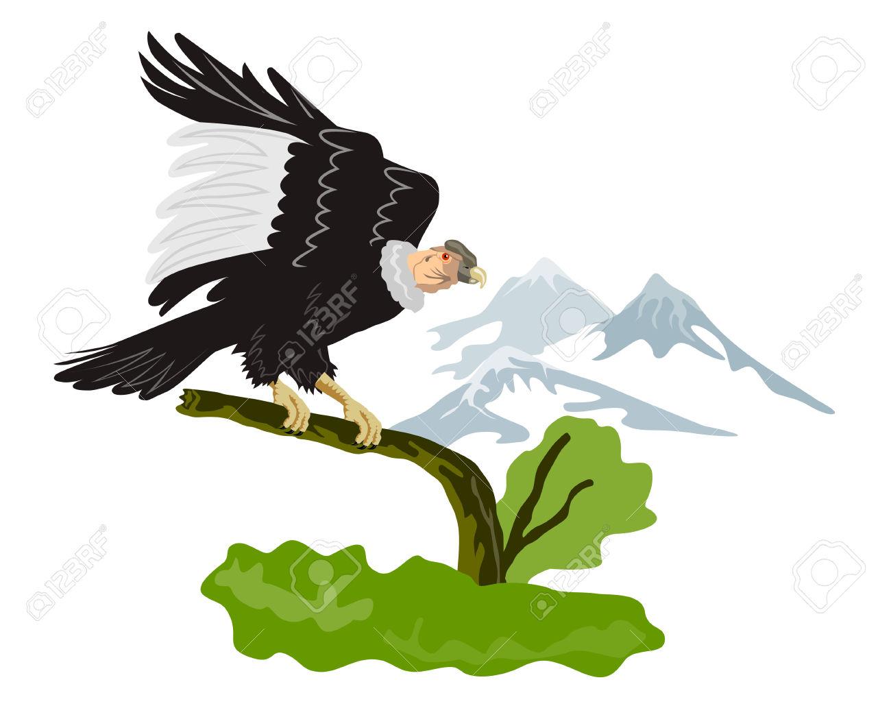 Andean Condor clipart, Download Andean Condor clipart for ...