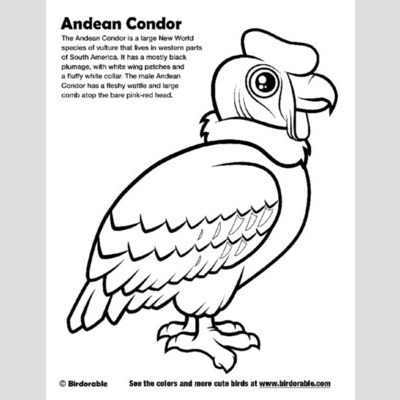 Condor coloring #20, Download drawings