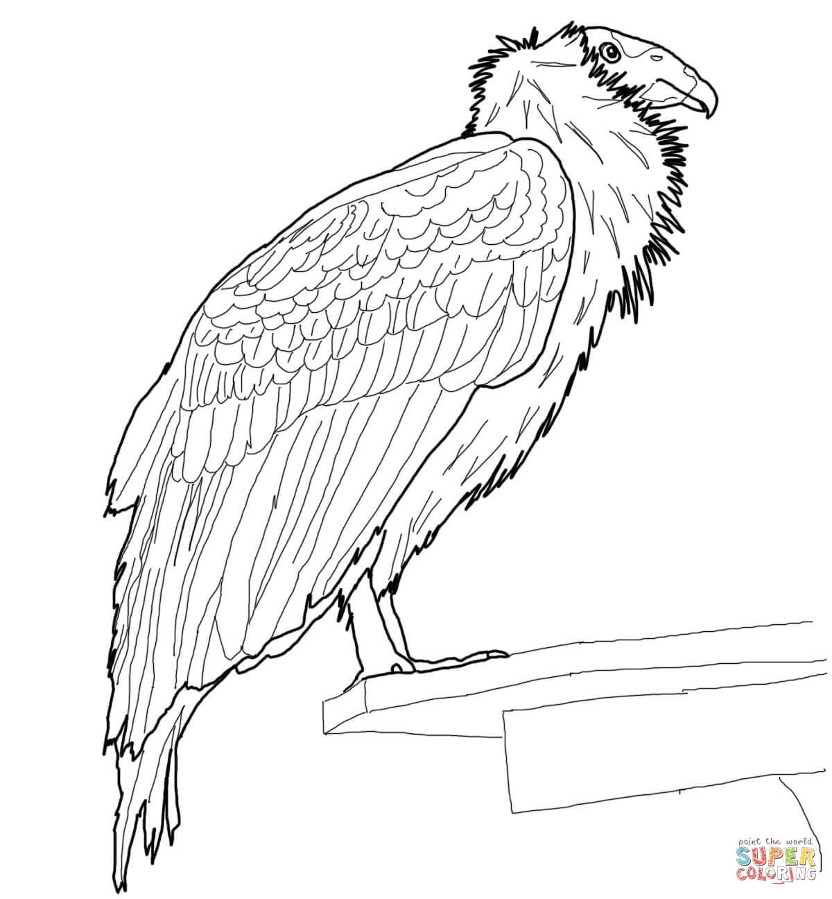 Condor coloring #11, Download drawings