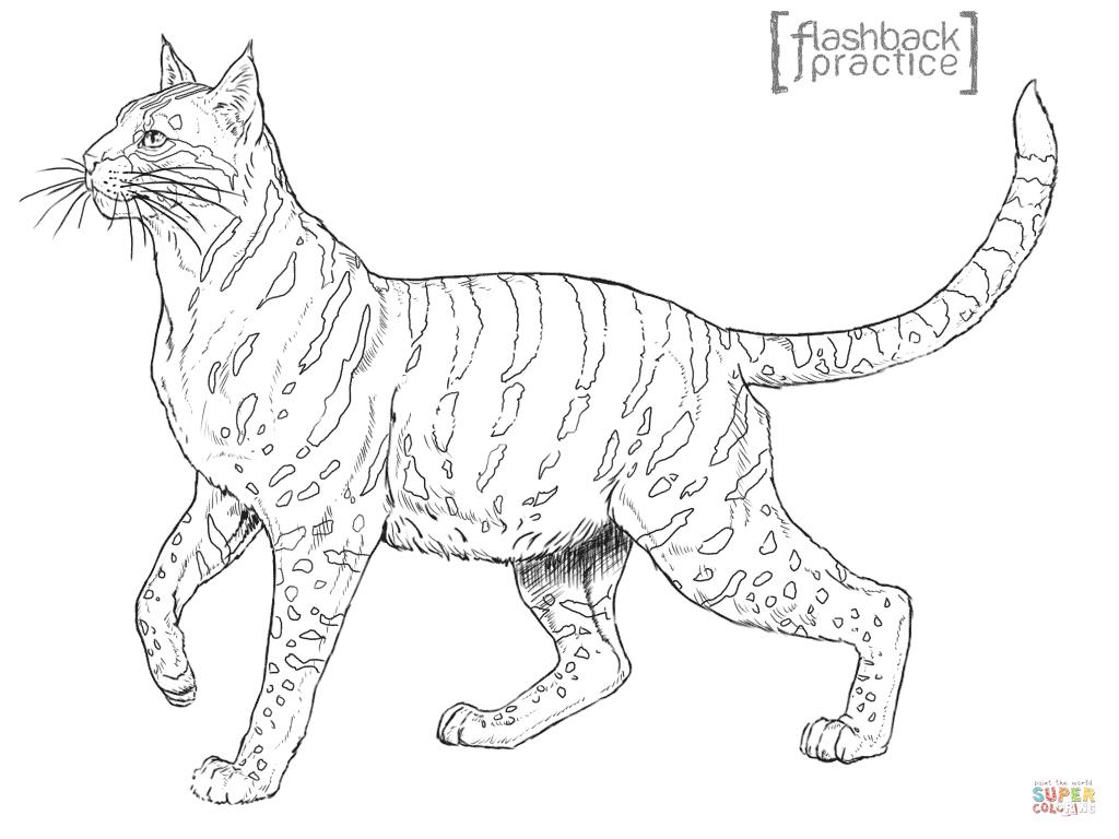 Wildcat coloring #16, Download drawings
