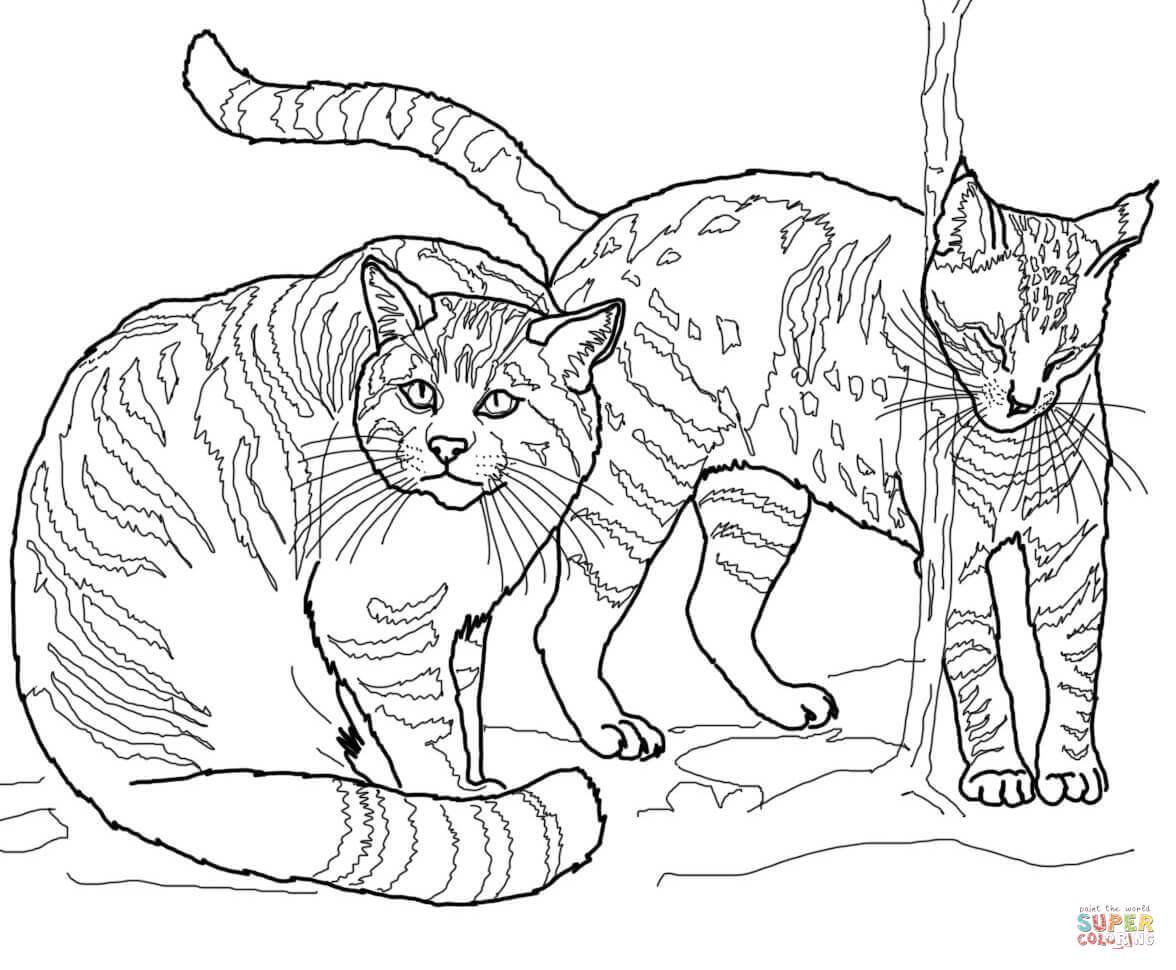 Wildcat coloring #5, Download drawings