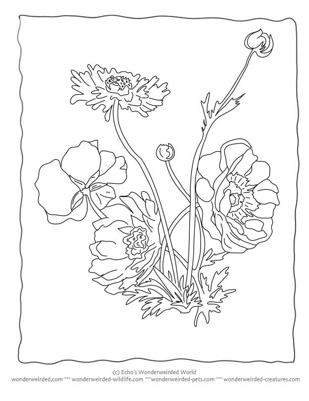 Anemone coloring Download Anemone