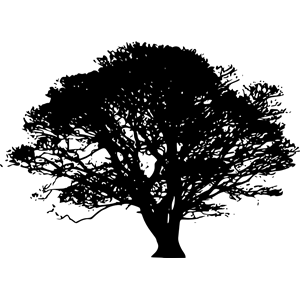 Angel Oak Tree svg #8, Download drawings
