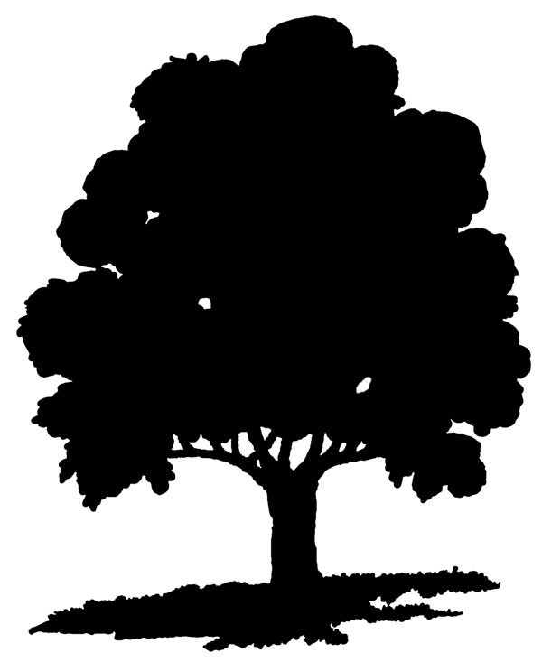 Angel Oak Tree svg #16, Download drawings