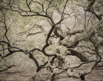 Angel Oak Tree svg #11, Download drawings