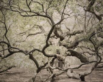 Angel Oak Tree svg #11, Download drawings