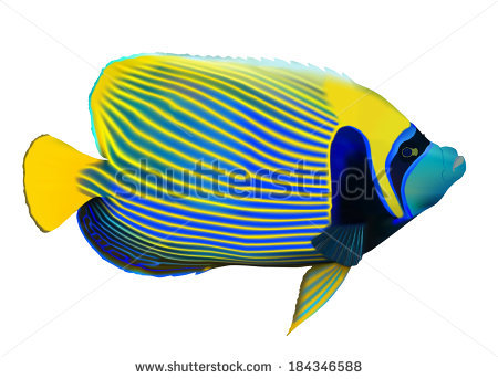 Angelfish svg #10, Download drawings
