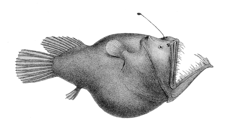 Anglerfish svg #3, Download drawings