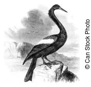 Anhinga clipart #17, Download drawings
