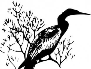 Anhinga clipart #3, Download drawings