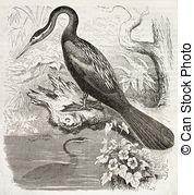 Anhinga clipart #9, Download drawings