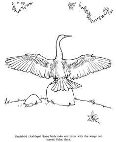 Roseate Spoonbill coloring #11, Download drawings