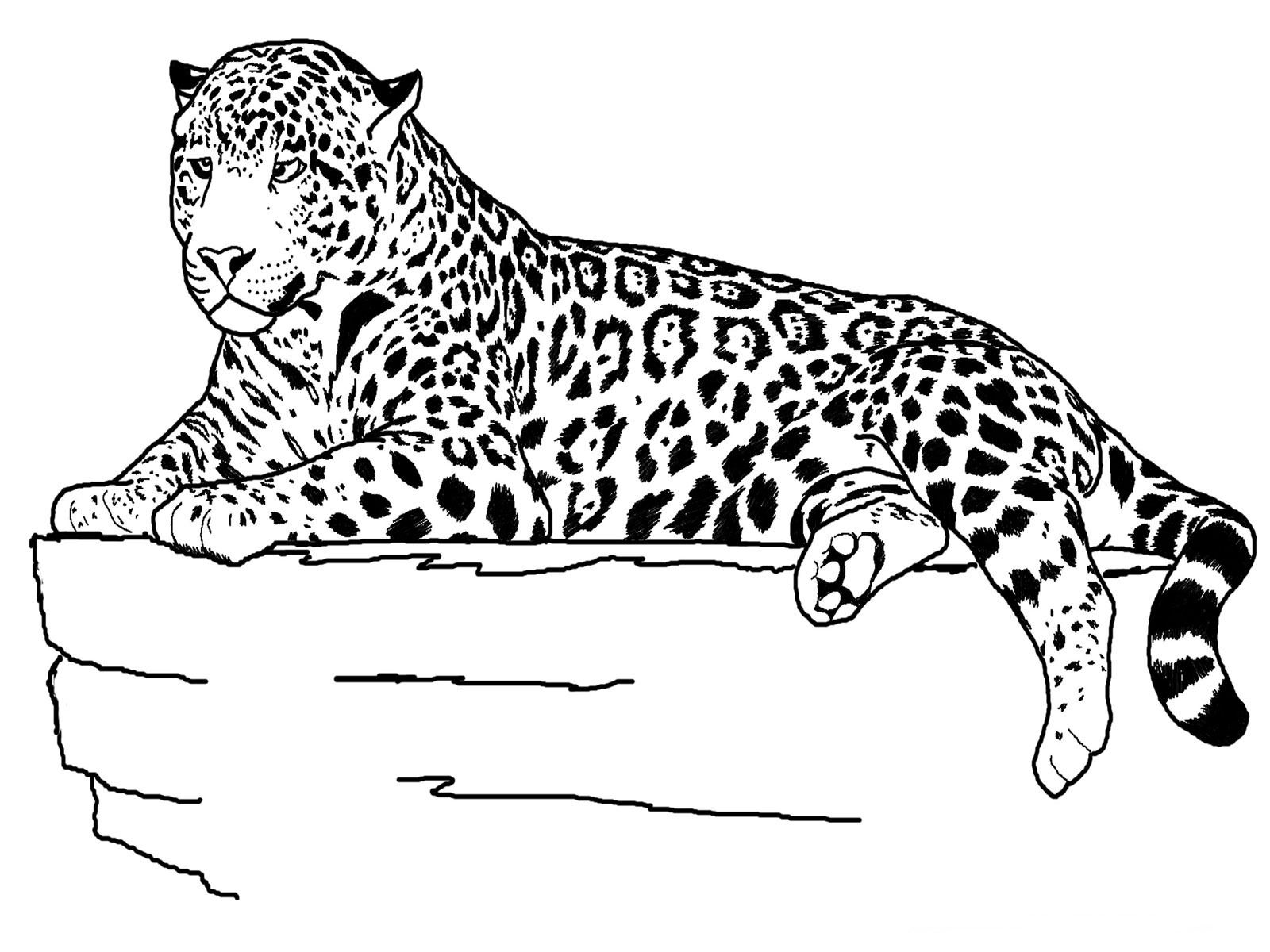 Animal coloring #7, Download drawings