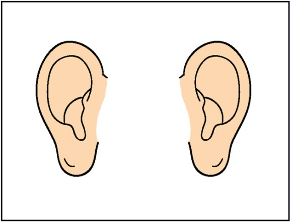 Animal Ears clipart #6, Download drawings