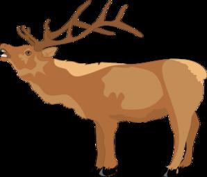 Animal svg #10, Download drawings