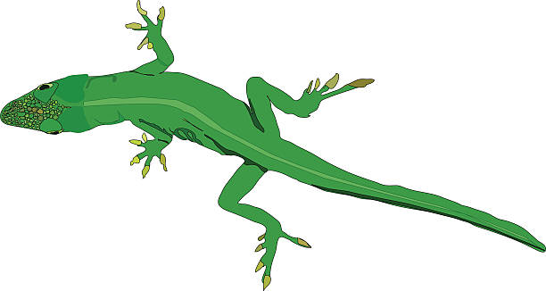 Anole clipart #9, Download drawings