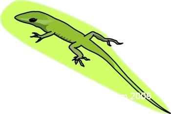 Anole clipart #11, Download drawings