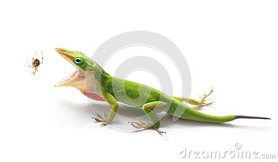 Anole clipart #8, Download drawings