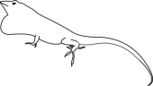 Anole clipart #5, Download drawings