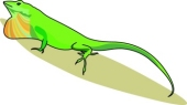 Anole clipart #14, Download drawings